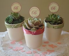 """12 Succulent Plant Wedding Favors, Rosettes in 3"""" White Ceramic Pots for Wedding, Baby, Bridal Shower, Favor Box/Tag Options Available"""