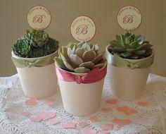 12 Succulent Plant Wedding Favors Rosett... : バラやガーベラだけじゃない!披露宴のテーブル装花に個性あふれる多肉植物はいかが? - NAVER まとめ
