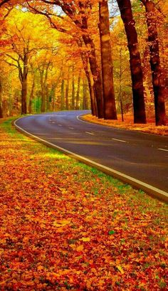 Beautiful Fall Day - perfect road for a drive Autumn Scenes, Seasons Of The Year, All Nature, Fall Pictures, Belle Photo, Autumn Leaves, Nature Photography, Beautiful Places, Scenery