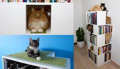 Y gatos, gatos, gatos