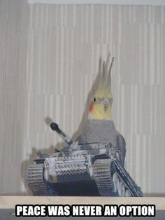 "bahahaha I need to get my parakeet a toy tank.  ""Peace"" is not in her vocabulary either."