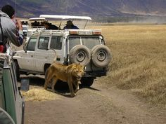 Ngorongoro, Tanzania http://www.imperatortravel.com/2012/05/as-seen-on-animal-planet-a-safari-in-east-africa.html