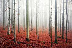 18 Forêts mystérieuses dans lesquelles il ne faudrait pas se perdre (11)Stanton Moor, Peak District, UK