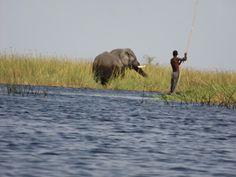 Mokoros on the Delta, Okavango Delta, Botswana