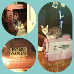 Cat Chat With Caren And Cody: Rainbow Bridge Remembrance Day-Honoring My Angel Bobo