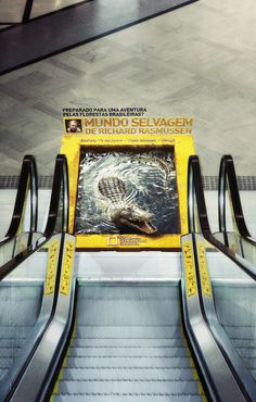 NatGeo - Mundo Selvagem by Miagui Imagevertising, via Behance
