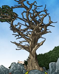 Unregarded -The Witch Tree - Monterey - Fine Art Print by Lawrence Klimecki