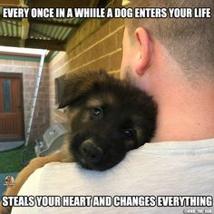 Awe, who could resist those puppy eyes? Awe, who could resist those puppy eyes? German Shepherd Memes, German Shepherd Pictures, German Shepherd Puppies, German Shepherds, German Dogs, Gsd Puppies, Cute Puppies, Cute Dogs, Wolf