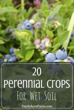 20 Perennial Crops for Wet Soil: Wet soil can be a challenge for even the most experienced gardeners. If you're dealing with damp soil, here are some tips for improving the condition, and 20 perennials crops that might grow well there.