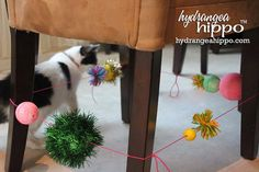 """""""Go-Anywhere"""" cat toy"""