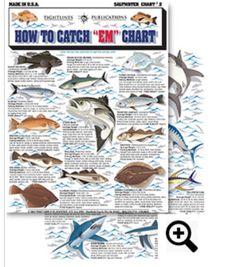 How to Catch EM Saltwater Chart #2 Black Sea Bass, Striped Bass, Bluefish, Codfish, Pollack, Fluke, Flounder, Porgy, Haddock, Weakfish, Mackeral, Red Drum, Blue Marlin, Skipjack, Bluefin Tuna, Albacore, Yellowfin Tuna, Blue Shark, Great White Shark, Bonito, Hammerhead Shark, White Marlin, Big Eye Tuna. Only $2.99