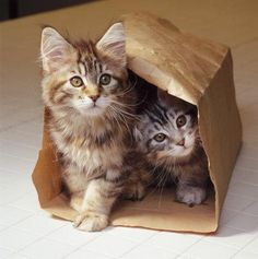 Cats love playing with paper bags...