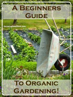 A Beginners Guide To Organic Gardening | GrowingRealFood.com #organicgardening #gardening