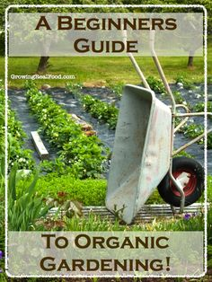 A Beginners Guide To Organic Gardening | GrowingRealFood.com #organicgardening #gardening