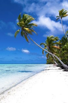 Discover Zika Free South Pacific Islands