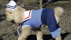Fiesta de disfraces para perros por Halloween en Riverside Park