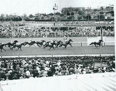 Macdougal 1959 Melbourne Cup