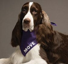 Day 4: Diamond Jim:  Alzheimer Champion Before Diamond Jim won best of show at the Westminster Dog Show in 2007, this English springer spaniel worked as a certified therapy dog comforting individuals with Alzheimer's. After his big win, this caring canine returned to life as a  therapy dog.