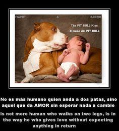 Mejores 61 Imagenes De Frases Perrunas Y De Amor Animal En Pinterest