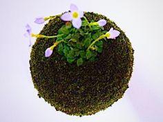 毎年春にたくさんの小花を咲かせます。薄い青紫色の花びらと中心部の黄色との組み合わせが美しい。可憐な姿に似合わずとても丈夫な花です。花言葉:甘い思い出開花期:3...|ハンドメイド、手作り、手仕事品の通販・販売・購入ならCreema。