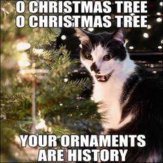 Cats Favorite Carol For Christmas