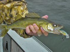 Walleye Fishing Tips