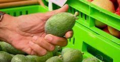 Fruta brasileira desconhecida no país faz sucesso na Nova Zelândia