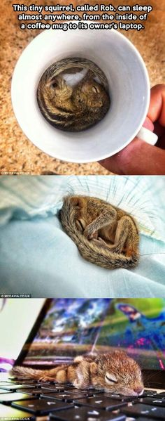 Rob the tiny squirrel. AWW I want him. =)