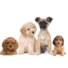 Why you should get a dog reason #7: Dogs are Good for the Whole Family