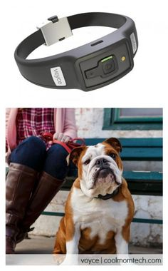 The new high-tech Voyce Dog Collar: It's mindblowing what this will do.