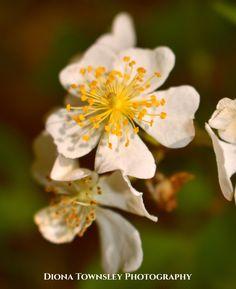 Macro Photography, Plants, Flora, Planters