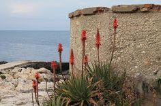 Living in Sicily - Vardag På Sicilien: We go often to Brucoli for a coffee