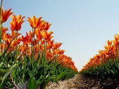 je zit onder de bloemen dus het veld lijkt niet te eindigen!