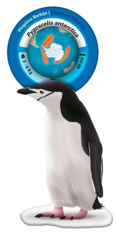 Penguinfo, La aplicación que va a ponerte muy fácil conocer las 17 especies de pingüinos que existen y con la que vas a aprender a reconocerlos y diferenciarlos.