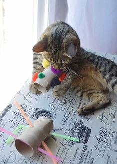 Cats Toys Ideas - Keeping your cat entertained doesn't have to be an expensive exercise. The UK's largest cat charity, Cats Protection , has compiled its favourite ideas for feline-friendly DIY cat toys which are both simple and cheap to make. www.styletails.co... - Ideal toys for small cats