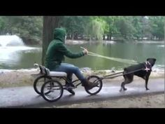 Why Not Build A Dog Cart? - Puppy Leaks