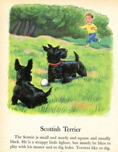 Scottish Terrier Dog Illustration by Tibor Gergely  from a Vintage Childrens Book