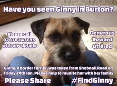 Let's use the power of Pinterest, Facebook and Twitter to find this dog that was taken from Shobnall Road in Burton on Trent on Friday. Someone must have seen Ginny so please share on here, FB and Twitter so that it can be seen by as many people as possible. #FindGinny Burton On Trent, Friday, Facebook, Dog, Twitter, Business, People, Diy Dog, Doggies