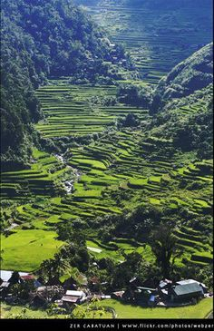 """The Ifugao Rice Terraces which has been described as the """"Eighth Wonder of the World"""" against the widely-known list"""
