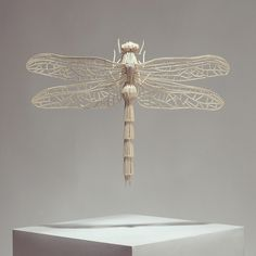 Insect sticks (insects made from matchsticks), Kyle Bean