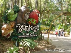 There is a Rainforest Cafe in Animal Kingdom, and another one in Downtown Disney. We ate at both of them on our Orlando Trip in 2011!  We've also been to the one in the MGM in Las Vegas and the one in Ontario, CA (for my birthday!).  It's fun, and we enjoy the food!