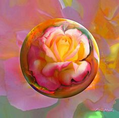 Robin Moline | Rotarian Peace Rose Digital Art by Robin Moline - Rotarian Peace Rose ...