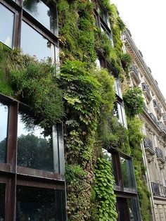 'Musee de Quai Branly Vertical Garden, Paris, France. Photo courtesy of Tim Brown Architects, Flickr Creative Commons Attribution License.