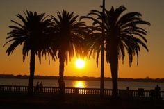 sunrise bayshore tampa - Google Search - home page?