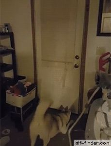 Random gif Gif Finder – Find and Share funny animated gifs Cute Funny Animals, Funny Animal Pictures, Funny Cute, Funny Dogs, Random Pictures, Goofy Pictures, Funny Husky, Funny Animal Gifs, Husky Meme