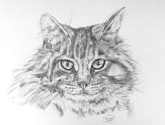 #cat #pencil #scetch #art #portrait Art Sites, Color Combos, Pencil Drawings, Portrait, Cats, Pencil, To Draw, Kunst, Colour Schemes
