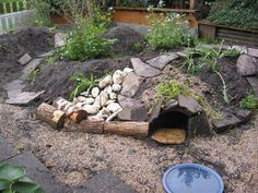 I have seen numerous suggestions for Russian tortoise diet Some great Some awful. Russian Tortoises are nibblers and appreciate broad leaf plants. Tortoise House, Tortoise Food, Tortoise Habitat, Turtle Habitat, Sulcata Tortoise, Tortoise Care, Turtle Pond, Pet Turtle, Tortoise Enclosure