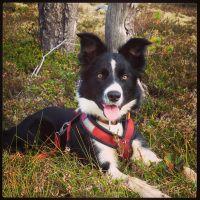 Tova votter oppskrift   Trine's blog Corgi, Blog, Animals, Animales, Corgis, Animaux, Animais, Animal
