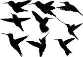 Bird_silhouette : humming bird collection - vector