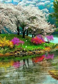 Beautiful Nature Pictures, Beautiful Nature Wallpaper, Amazing Nature, Nature Photos, Beautiful Landscapes, Beautiful World, Beautiful Gardens, Mi Photos, Landscape Photography